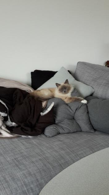 Grace, chat d'appartement